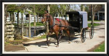 Abes-buggy-rides-member
